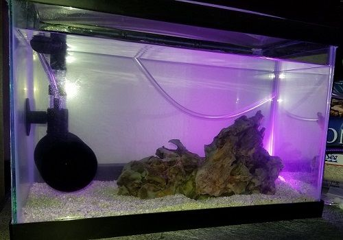 2.5 gallon tank on 06232019